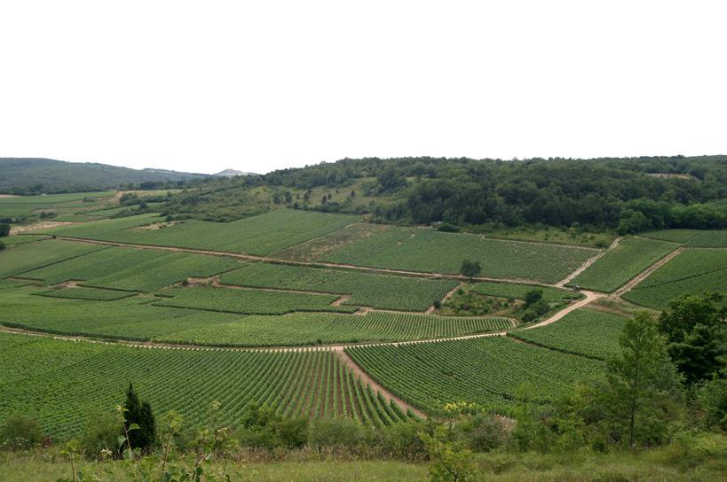 Bon Mercredi Bourgogne-blanc---bourgogne-rouge---aligote-g